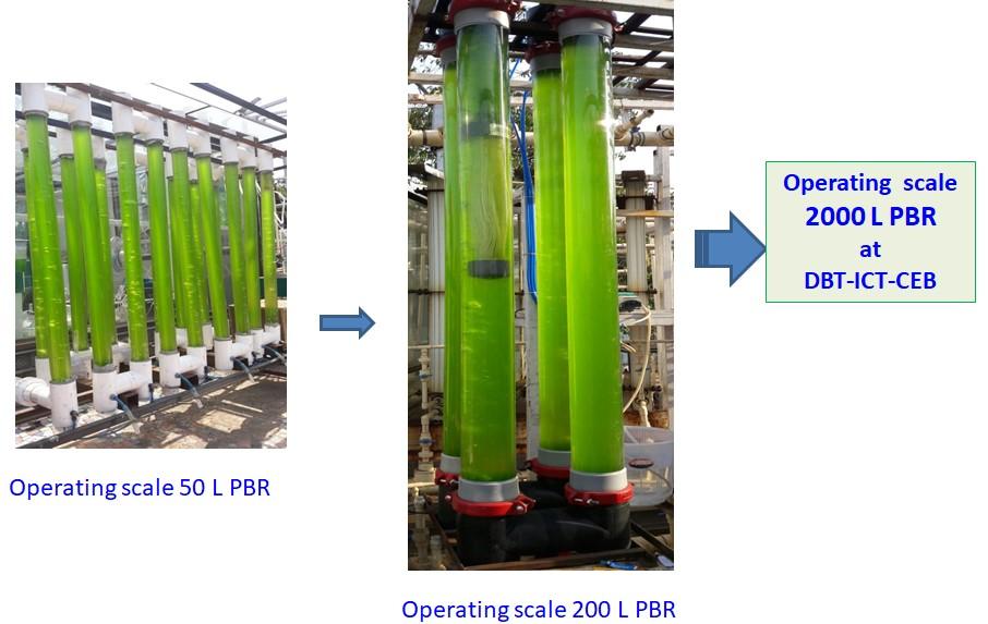 Energy Biosciences-Biofuel | Department of Biotechnology